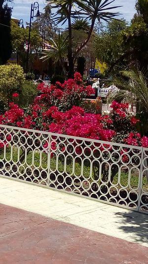 Garden for Sale in Monroe, WA