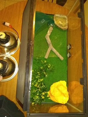 20 gallon perfection condition includes 2 lamps sunbathing rock and some decorative items and thermometers!!! for Sale in Ashland, MA