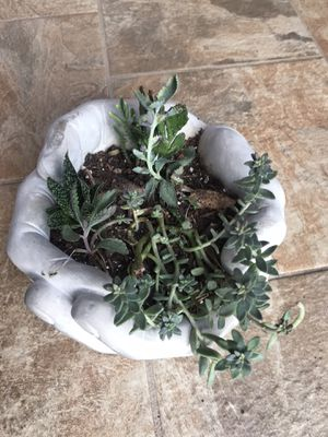 heavy hand planter pot succulent plant for Sale in Grand Prairie, TX