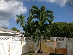 FREE CHRISTMAS PALM for Sale in Pompano Beach, FL