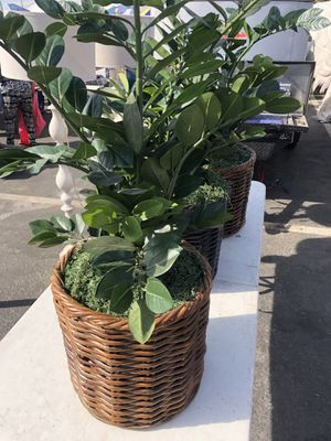 Fake plants house plants for Sale in Modesto, CA