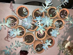 plants and succulents for Sale in Hayward, CA