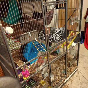 Rat & Cage + Items [100$] [All Included] for Sale in Hurst, TX
