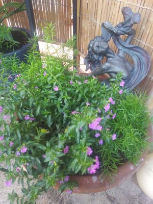POTTED PLANTS for Sale in Fresno, CA