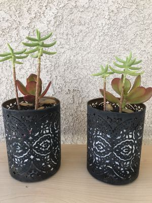 Succulent Plant Decor - PAIR for Sale in San Jacinto, CA