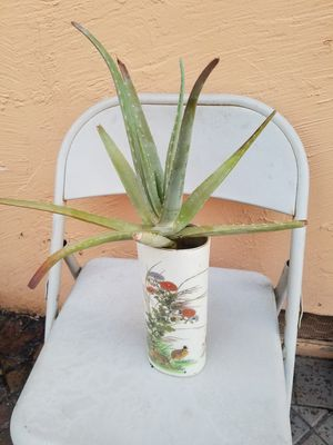 Aloe Vera for Sale in San Jose, CA