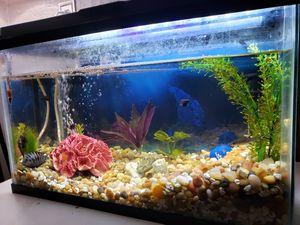 10 gallon fish tank for Sale in Nuevo, CA