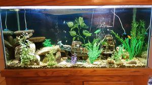 100 gal fish aquarium for Sale in Phoenix, AZ