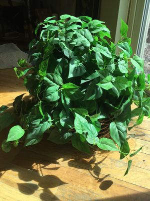 Fake ivy plant for Sale in Arvada, CO