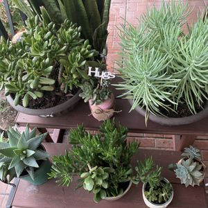 Plants From $10 And Up for Sale in Los Angeles, CA