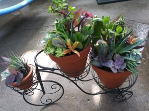 Succulents en maceta s de barro y bicicleta de metal grande for Sale in Bell, CA