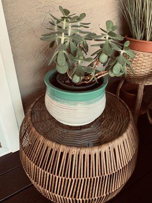 Ceramic Plant Pot or Flower Pot for Sale in Chula Vista, CA