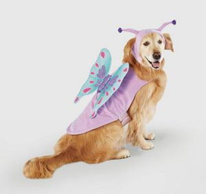 New butterfly dog Halloween costume size medium for Sale in Henderson, NV