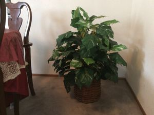Beautful Fake Plant looks like real, 3 feet and 3 inches high. for Sale in Hercules, CA