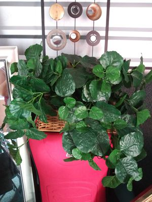 Fake plant for Sale in Garland, TX