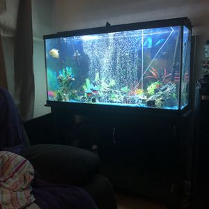 55 Gallon Fish Tank With Everything Needed To Start Right Away! for Sale in Alameda, CA