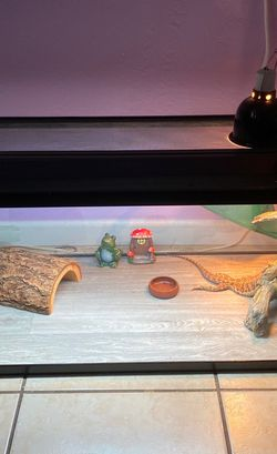 Reptile Tank And Accessories for Sale in Fort Lauderdale,  FL