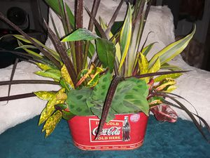 3 Combination Plant Dish Gardens (live plants) in generic pots for Sale in Zellwood, FL