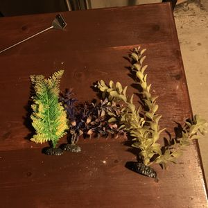 Fish Tank Plants for Sale in Oakland, CA