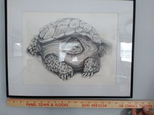 Turtle picture for Sale in Lancaster, OH