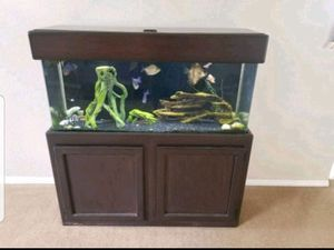 55 gal Aquarium for Sale in College Station, TX