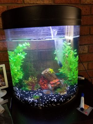 10 gal tank w/ decor for Sale in Phoenix, AZ