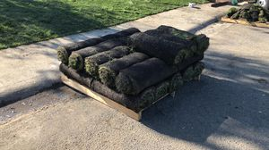 Natural grass 90/10 tall fescue ($50 for everything) for Sale in San Bruno, CA
