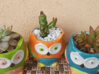 Spring / Summer Owl 🦉 ceramic Pots of Mix Succulent for Sale in Inglewood,  CA