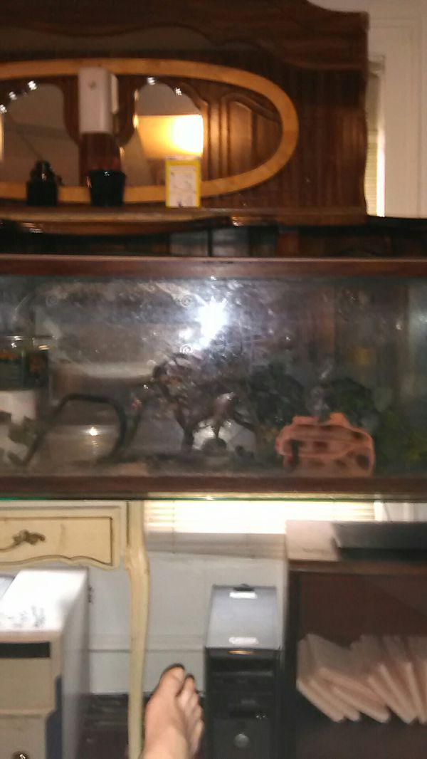 55 gallon aquarium tank