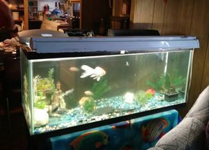 Fish tank for Sale in Whitehall, MT