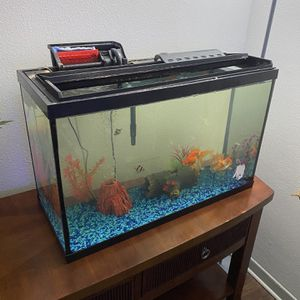 Fish Tank 29 Gal for Sale in Valrico, FL
