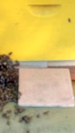 Honey Bees 4 Sale/Vendo Abeja's for Sale in Orlando,  FL