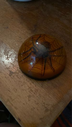 Spider paperweight for Sale in Mesa, AZ