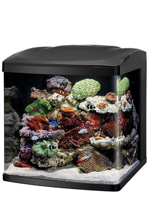 Saltwater/Freshwater Fish Tank for Sale in Missouri City, TX