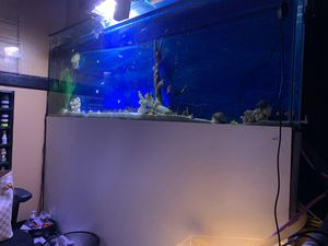 Fish tank 20gallon wall tank for Sale in Irving, TX