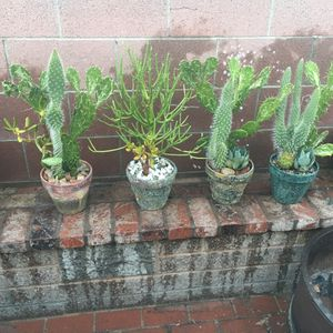Rustic centerpiece with Cactus and succulent and spike Maguey $20 each for Sale in Bloomington, CA