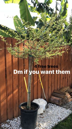 Free Trees for Sale in Long Beach, CA