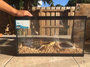 Leopard gecko with enclosure for Sale in Miami, FL