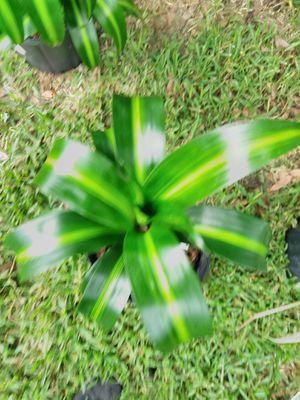 Green plant for Sale in Altamonte Springs, FL
