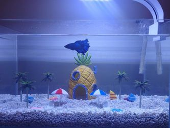 High Quality Nano Aquarium for Sale in Universal City,  CA