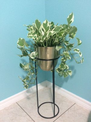 Beautiful pothos live plant in gold and black stand ❤️ for Sale in Riverview, FL