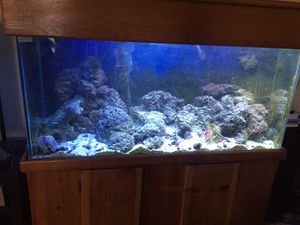75 gallon salt water fish tank with all the accessories for Sale in Denver, CO