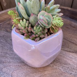 Spring Succulent Bouquets for Sale in Huntington Beach, CA