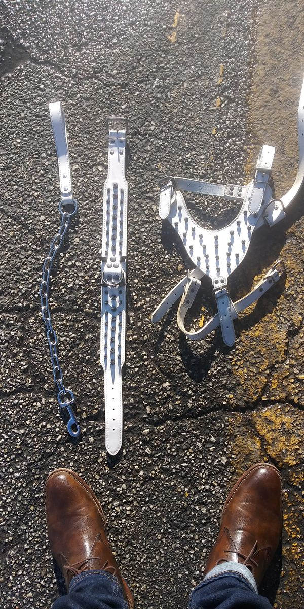 Dog collar set with harness and leash