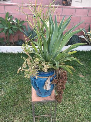 Big Rustic Ceramic Jar with Agave & variety Of Succulent for Sale in Fontana, CA