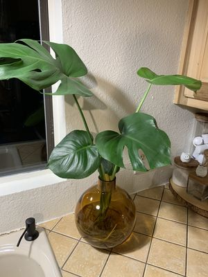 Monstera plant and glass base for Sale in Lancaster, TX