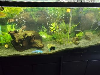 55 Gallon Fish Tank, Two 10gals Lots Of Accessories for Sale in Haines City,  FL