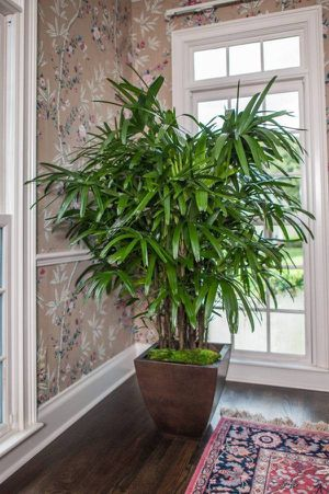 Indoor plants for sale for Sale in College Park, GA
