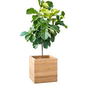 Teak Wood Square Planter for Sale in Columbus, OH