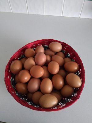 Free range eggs for Sale in Eagle Lake, FL